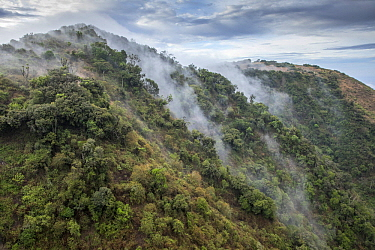 Forested hills in mist, Ngong Hills, Kenya