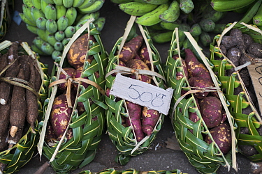 Sweet Potato (Ipomoea batatas) harvested in baskets, Port Vila, Efate Island, Vanuatu