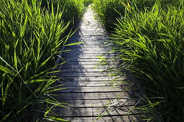 Boardwalk, Vigueirat Marshes, Camargue, France