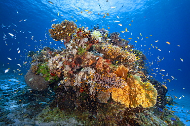 Coral reef in lagoon, Mayotte