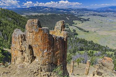 Petrified trees, Specimen Ridge, Yellowstone National Park, Wyoming