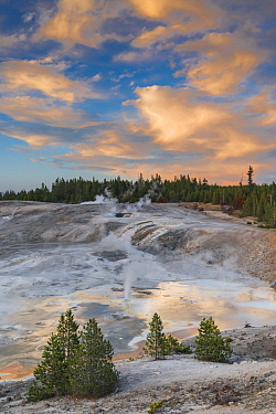 Fumaroles, Porcelain Basin, Norris Geyser Basin, Yellowstone National Park, Wyoming