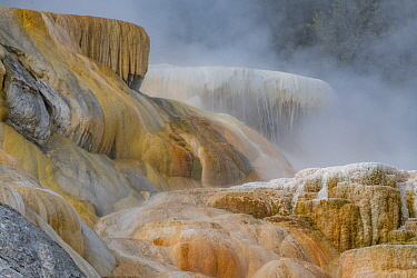 Travertine formations, Palette Spring, Mammoth Hot Springs, Yellowstone National Park, Wyoming