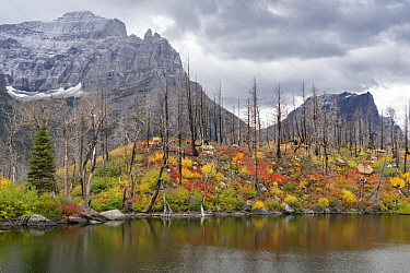 Burned trees and mountains, Lost Lake, Glacier National Park, Montana