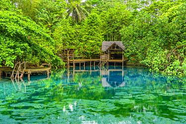 Freshwater spring, Nanda Blue Hole, Turtle Bay, Espiritu Santo, Vanuatu