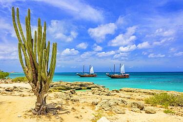 Pitayo de Mayo (Stenocereus griseus) cactus and ships, Malmok Beach, Aruba, Caribbean