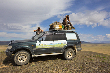 Przewalski's Horse (Equus ferus przewalskii) conservationists, Mr. O. Ganbaatar and Dalaitseren Sukhbaatar, scanning for horses, Gobi Desert, Mongolia