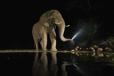 African Elephant (Loxodonta africana) bull bathing at waterhole at night, Zimanga Game Reserve, South Africa