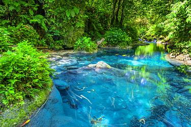 Creek in rainforest, Jamaica