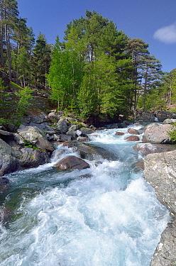 River, Regional Natural Park of Corsica, Corsica, France
