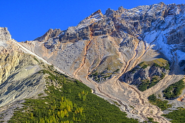 Sublapine scree mountainside with Mountain Pine (Pinus mugo) and larches, Fanes-Sennes-Braies Nature Park, Dolomites, Tyrol, Italy, UNESCO World Heritage Site