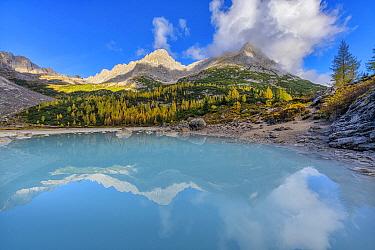 European Larch around Lake Sorapis,alpine lake of glacial meltwater, Regional Natural Park of the Ampezzo Dolomites, Dolomites, Tyrol, Italy