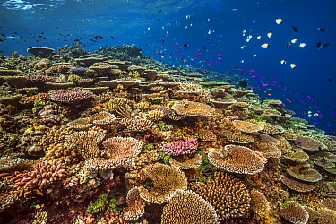 Coral reef, Ottp's Point, Kimbe Bay, Papua New Guinea