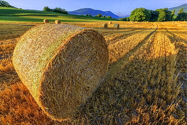 Hay bales in field, Haute-Savoie, France