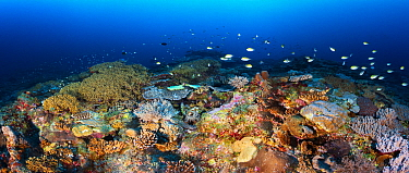 Coral reef, Mayotte, Mozambique Channel