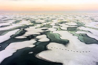 Polar Bear (Ursus maritimus) tracks on melting ice, Canada, Arctic Ocean