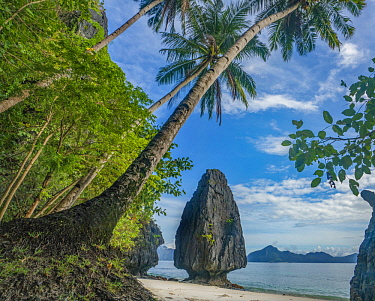 Rock formation and palm trees on beach, Hidden Beach, Palawan, Philippines