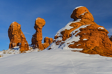 Rabbit tracks and formations in winter, Garden of Eden, Arches National Park, Utah