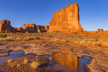 The Organ reflected in pool, Arches National Park, Utah