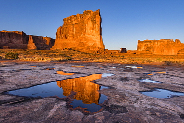 The Organ reflect in pool, Arches National Park, Utah