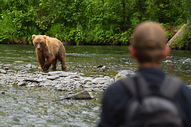 Grizzly Bear (Ursus arctos horribilis) near fisherman, North America
