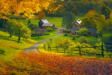 Deciduous forest and barn in autumn, Woodstock, Vermont