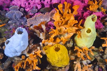 Pylon with sponges and bryozoans, Yorke Peninsula, South Australia, Australia