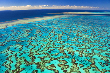 Tropical reef, Great Barrier Reef, Queensland, Australia