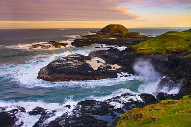 Coast at sunrise, Nobbies, Phillip Island, Victoria, Australia