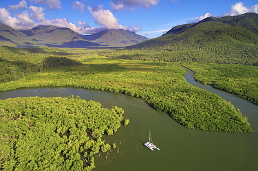 Mangroves along coast and boat, Deluge Inlet, Hinchinbrook Island National Park, Queensland, Australia