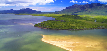 Mangroves along coast, Deluge Inlet, Hinchinbrook Island National Park, Queensland, Australia