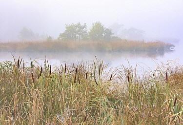 Wetland in morning fog, Kampina, Noord-Brabant, Netherlands