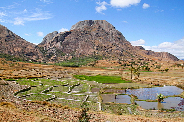 Granite mountains and rice field, Andringitra National Park, Madagascar
