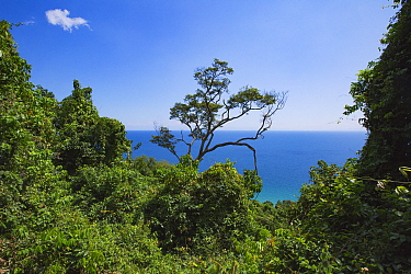 Rainforest, Lake Tanganyika, Gombe National Park, Tanzania