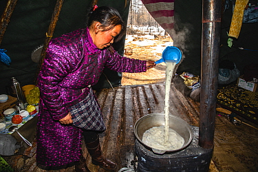 Tsaatan woman making traditional salt tea in the morning, Khovsgol, Mongolia