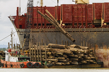 Logs being loaded on ships bound for China, Rajang River, Sarawak, Borneo, Malaysia
