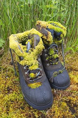 Moss on abandoned hiking boots, Finger Bay, Adak Island, Aleutian Islands, Alaska