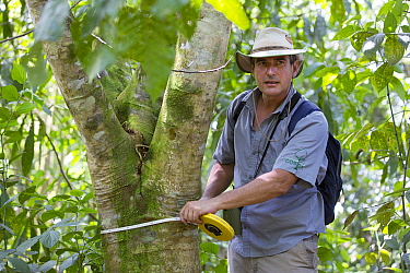 Botanist, Dr. Anton Weissenhofer, taking tree measurement in a pasture regenerated forest, Costa Rica