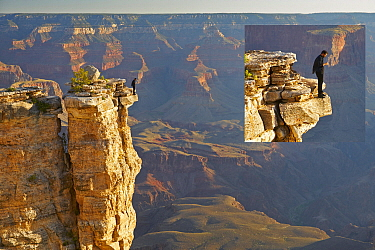 Tourist on phone at cliff edge, Mather Point, Grand Canyon National Park, Arizona