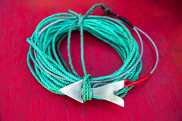 Swordfish (Xiphias gladius) lure, Taltal, Chile