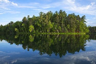 Forest on shoreline, Mantrap Lake, Minnesota