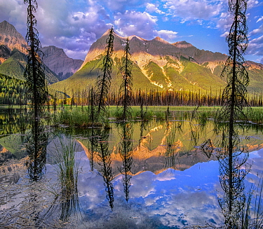 Chancellor Peak, Ottertail Range, Yoho National Park, British Columbia, Canada