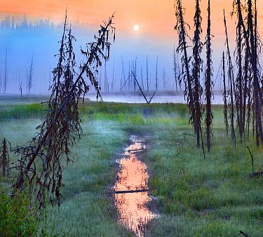 Sunrise over bog, Bear Lake, British Columbia, Canada