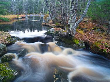 Small creek flowing over granite, Nova Scotia, Canada