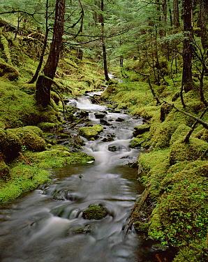 Creek in temperate rainforest along Eyak Lake, Cordova, Alaska  -  Matthias Breiter