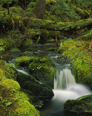 Creek in coastal rainforest along Eyak Lake, Cordova, Alaska  -  Matthias Breiter