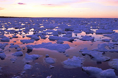 Pack ice floes at sunset on Hudson Bay during break-up, Churchill, Manitoba, Canada  -  Matthias Breiter