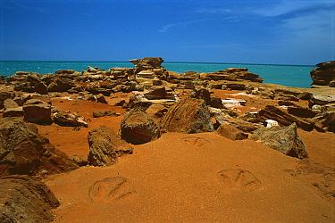 Dinosaur prints, Gantheaume Point, Broome, Australia  -  Matthias Breiter
