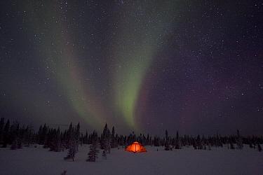 Northern lights or aurora borealis over illuminated tent, boreal forest, North America  -  Matthias Breiter