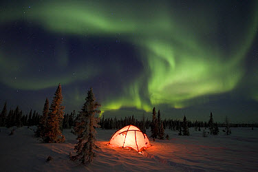 Northern lights or aurora borealis over illuminated tent, boreal forest, North America  -  Matthias Breiter
